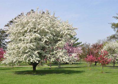 lg-arie-den-boer-arboretum-6